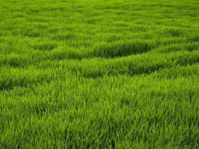 champ-herbe.jpg